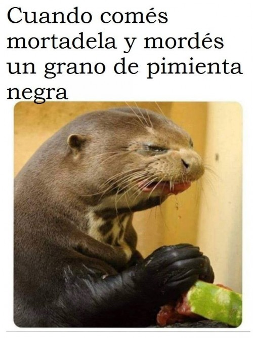 memes-graciosos-en-espanol-12.jpg
