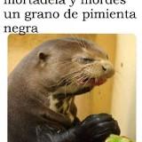 memes-graciosos-en-espanol-12