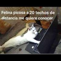 meme-gato.jpg