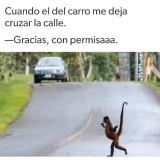un-meme-de-un-mono-cruzando-la-calle