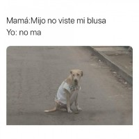 Un perro con una blusa