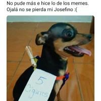El meme viral del perro que mandan a hacer los mandados en la cuarentena !