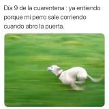 Dia-9-de-cuarentena-mi-perro-meme