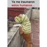 El-trauma-de-la-cuarentena-en-los-animales
