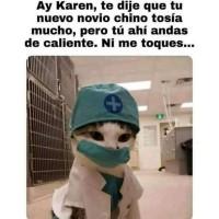Un meme de gato novio !  meme - gato - imagen - risa - animal