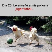Dia 25 de la cuarentena (coronavirus meme) Les enseñe a mis pollos y gallinas a jugar al futbol jajaja