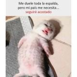 un-meme-de-gatito-durmiendo-en-la-cuarentena