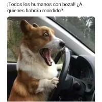 los-humanos-usan-bozal-meme.jpg