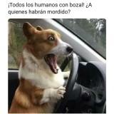 los-humanos-usan-bozal-meme