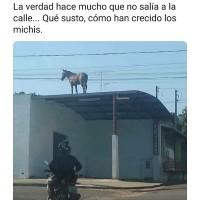 Un-Caballo-Arriba-Del-Techo-En-Cuarentena-Meme.jpg