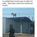 Un-Caballo-Arriba-Del-Techo-En-Cuarentena-Meme