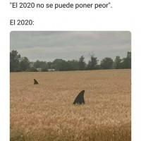 un-meme-del-2020.jpg