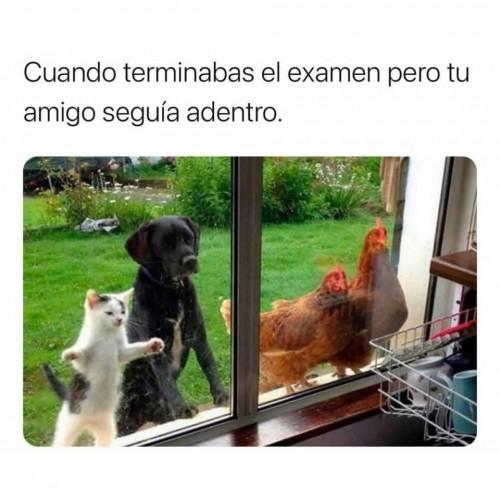 meme, estudiantes, escuela.