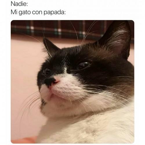Alguna ves vieron un gato con papada