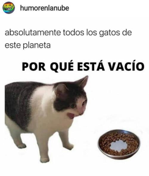 Un meme de gato
