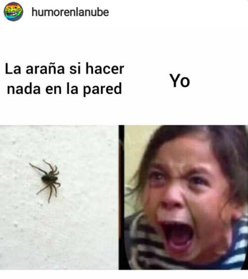 Un meme de la araña en la pared sin hacer nada